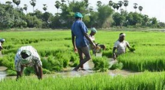 Agrarian officers assess crop damages caused by Sena caterpillar