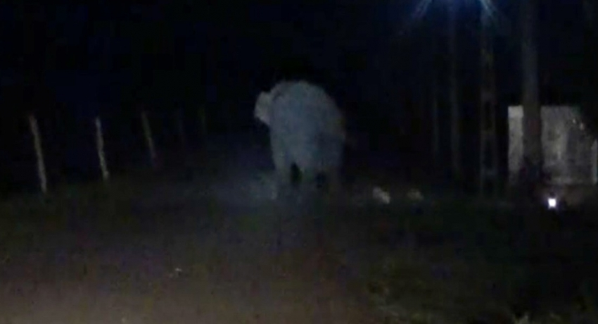 Child injured in wild elephant attack