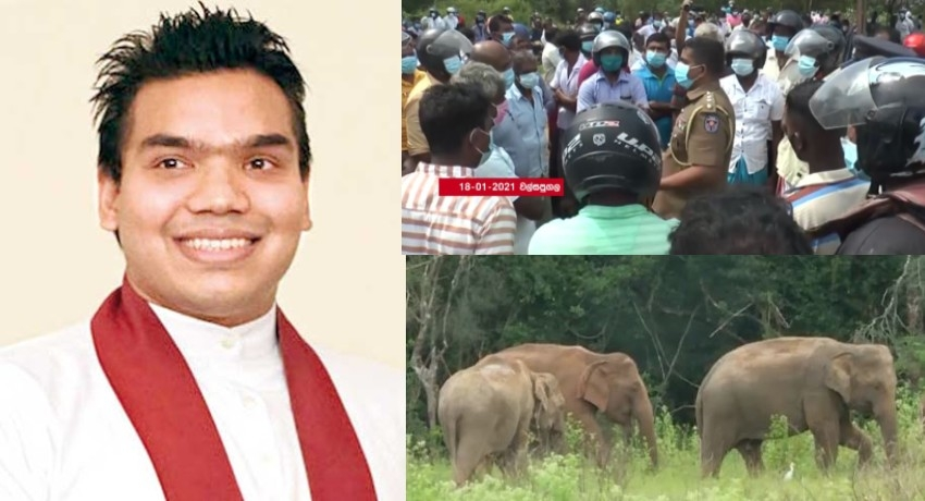 Wild Elephant Management Reserve will be gazetted; says Namal R.