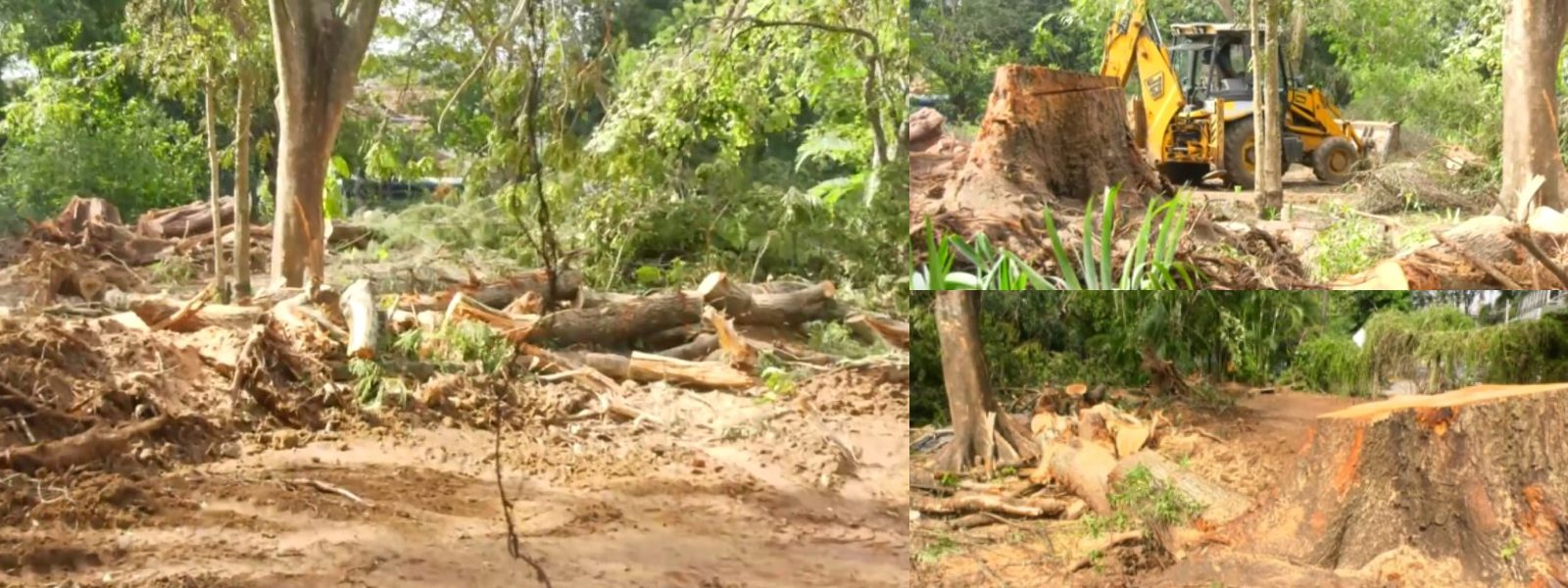 RAJAPIHILLA PARK DESTRUCTION; CEA ORDERED TO SUBMIT REPORT