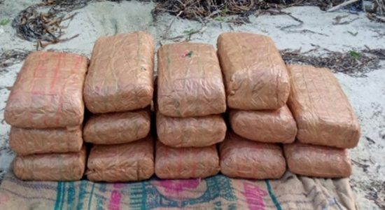 Navy recovers 31kg of Kerala cannabis at Manthai beach