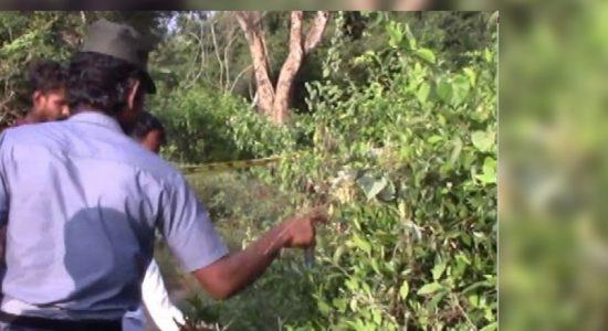 Wild elephant attack kills one