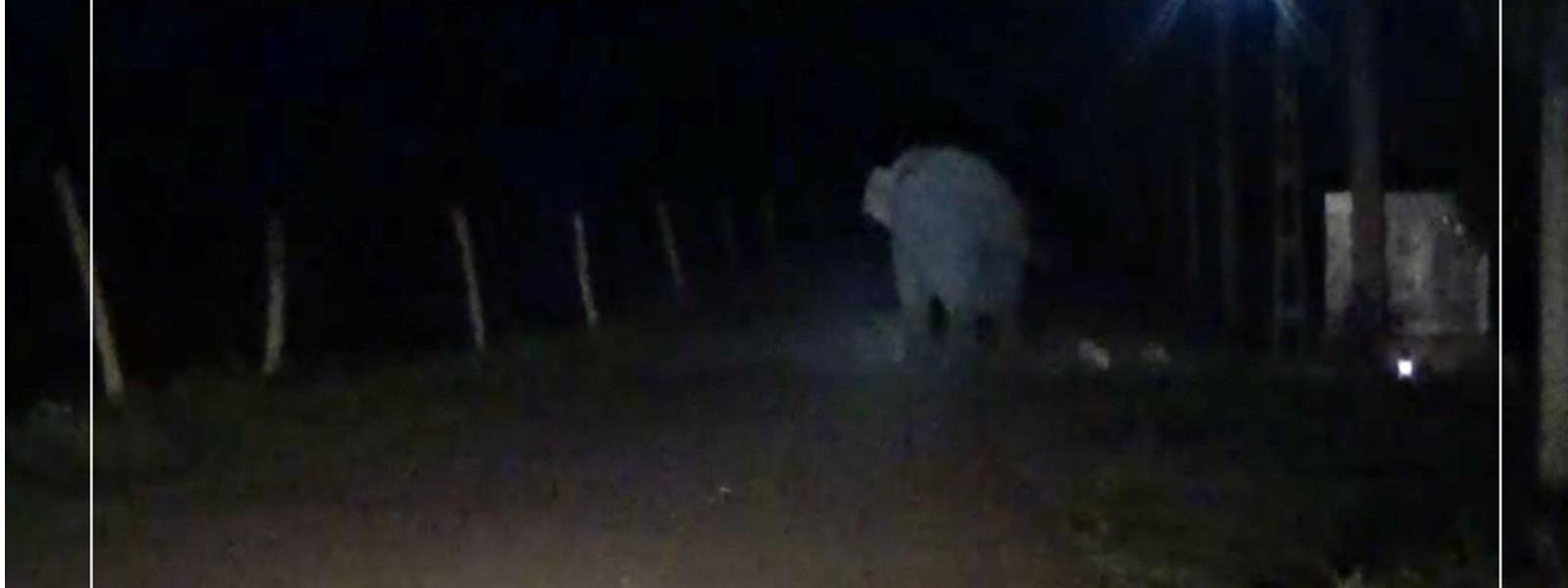 Child injured in wild elephant attack
