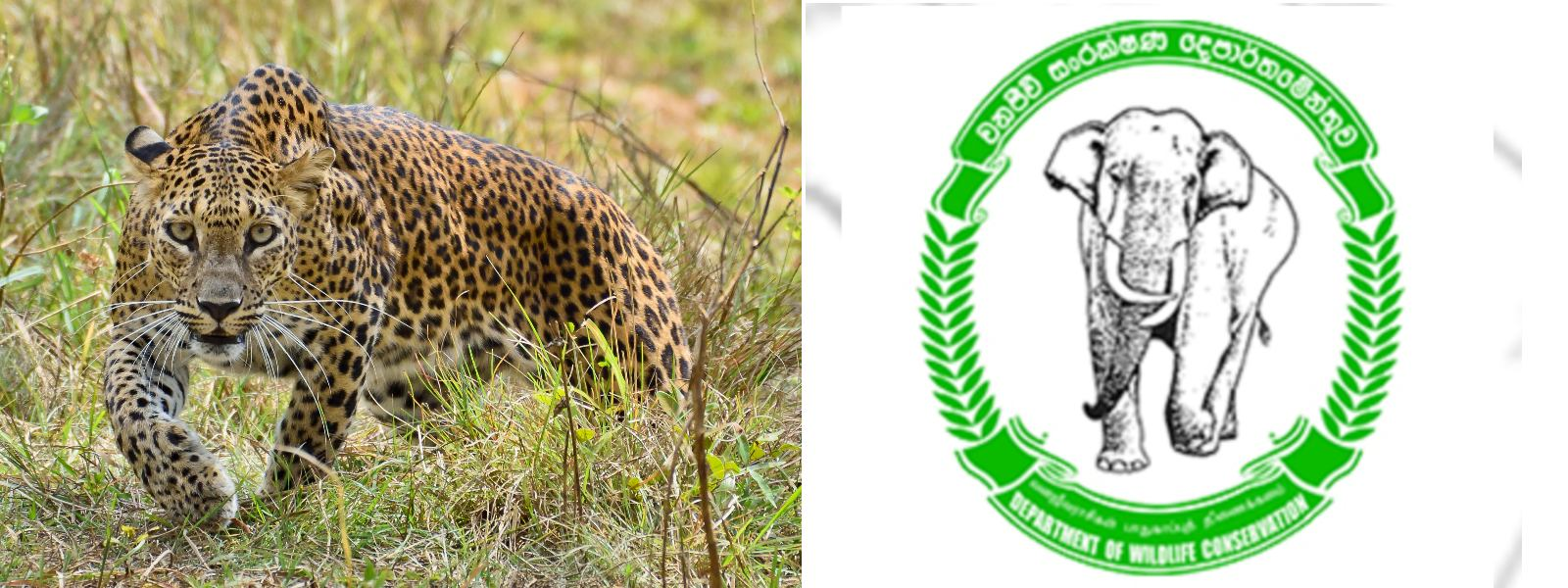 OPERATION LAUNCHED TO LOCATE VIOLENT LEOPARD