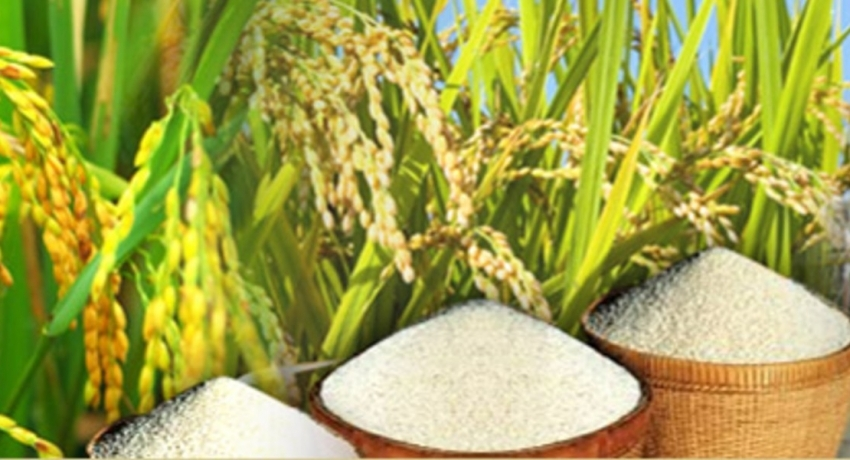 Rice prices to remain below Rs. 100/- for next three years