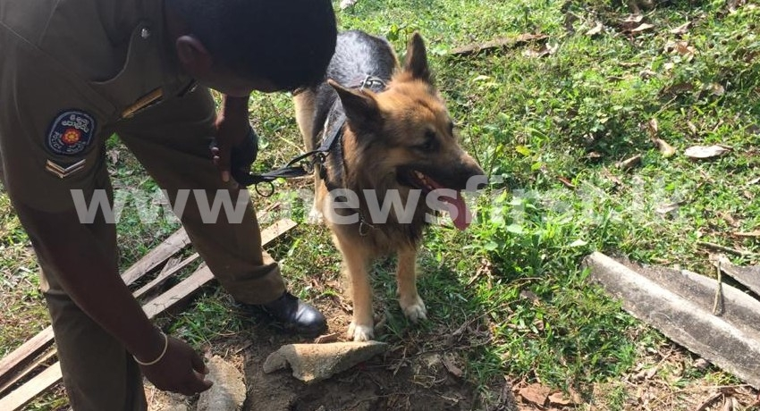 (PICTURES) Rocky leads cops to heroin hiding spot in Weligama