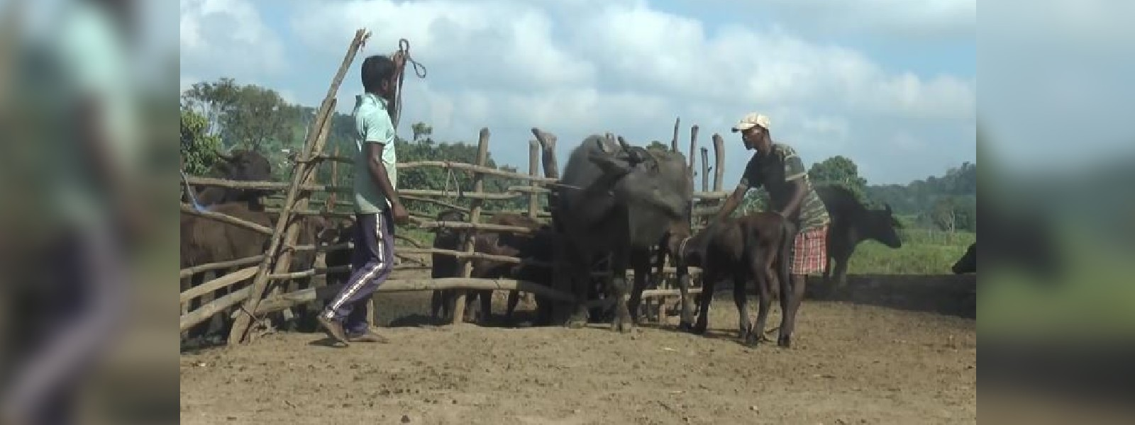Dairy farmers in Rambakan Oya crippled due to forest destruction