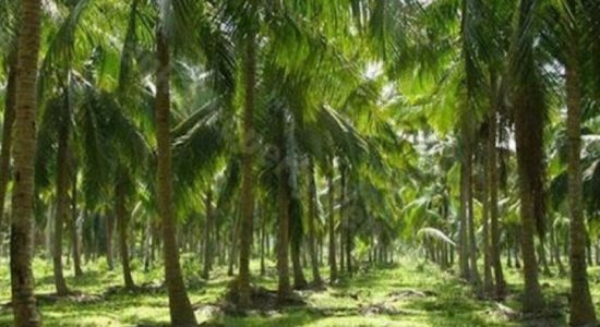 Regulations on Fragmentation & Sale of Coconut Estates to be amended