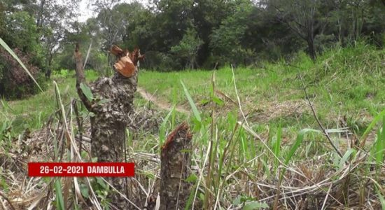 Dambulla residents lament clearing of lands