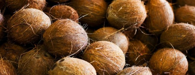 Price of coconuts to decline in the next 02 months