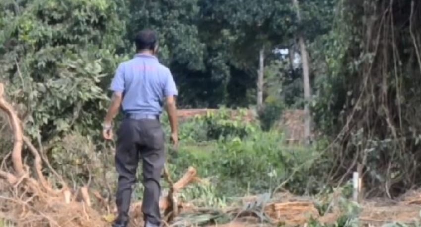 (VIDEO) Sole surviving Sri Lankan Legume saved in the nick of time