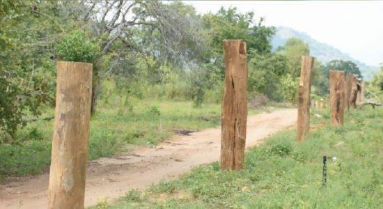 Dahaiyagala forest destruction continues