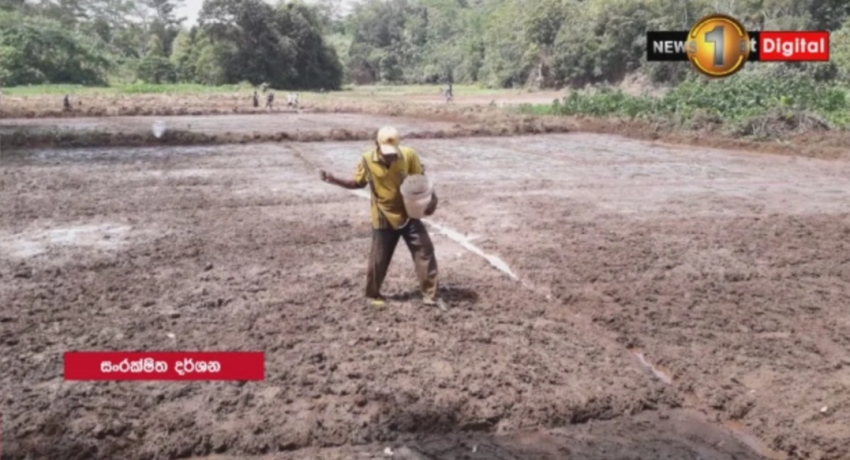 Yala season: 50,000 acres of barren paddy fields to be cultivated