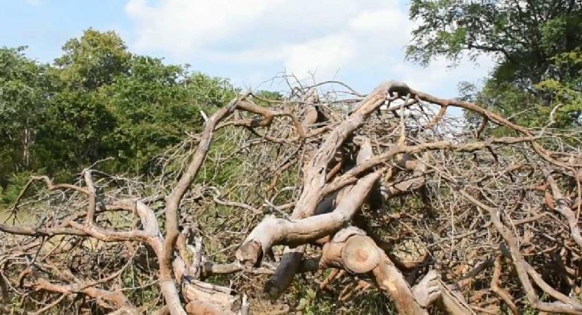 Forest Destruction in Dahaiyagala Thanamalwila