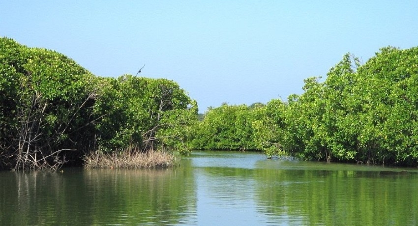 Joint Committee for the conservation of the Muthurajawela Wetlands