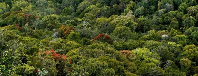 Minister agrees to drop plan to construct tanks in Sinharaja Rainforest