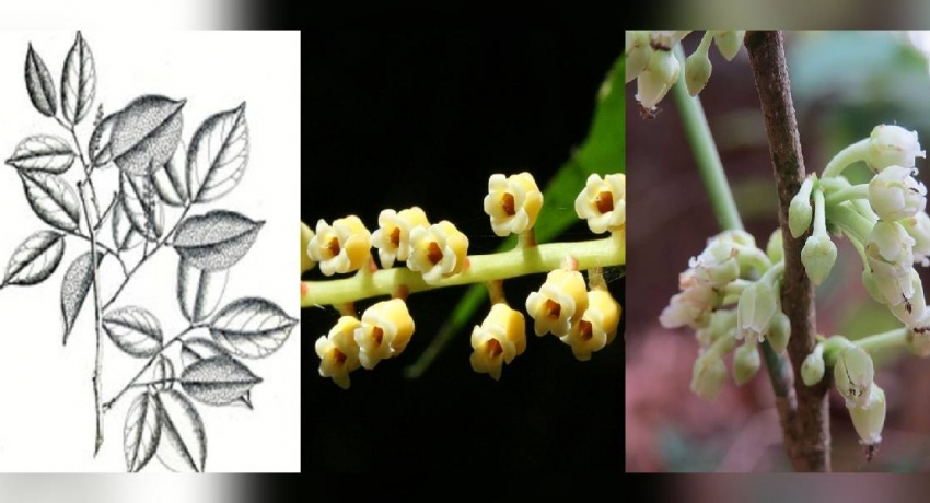03 new plant species added to National Red List of 2020