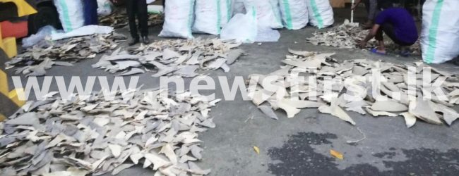 (PICTURES) Over 200 kg of dried fins of endangered sharks seized