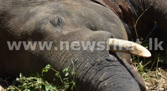 (VIDEO) Tusker 'Revatha' dies of electrocution