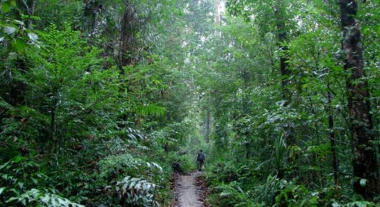 Privately-owned lands with forest cover near Sinharaja to be acquired
