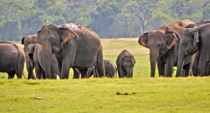 83 Wild Elephants killed since January 2021 – Officials