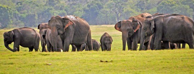 83 Wild Elephants killed since January 2021 – Officials