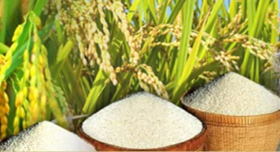 Ministry of Trade gathering data to maintain safe rice stocks