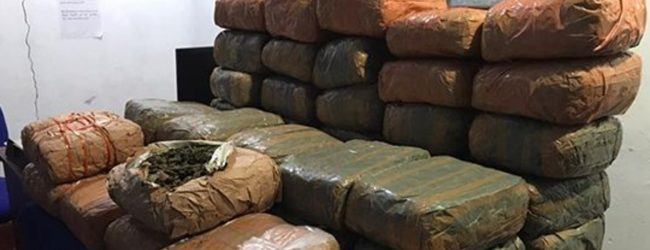Navy assists apprehension of Kerala cannabis worth Rs. 26 mn