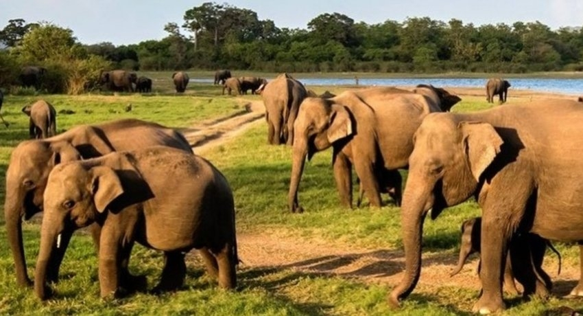 Father of 2 killed in a wild elephant attack