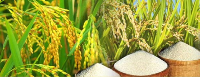 2000 metric tonnes of paddy converted to rice released to market