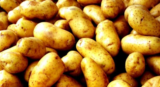 Special Excise Duty on Imported Potatoes increased