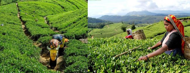 Rs. 1000/- daily wage for plantation workers from April