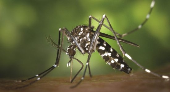 DENGUE ON THE RISE: 7,317 patients reported so far this year