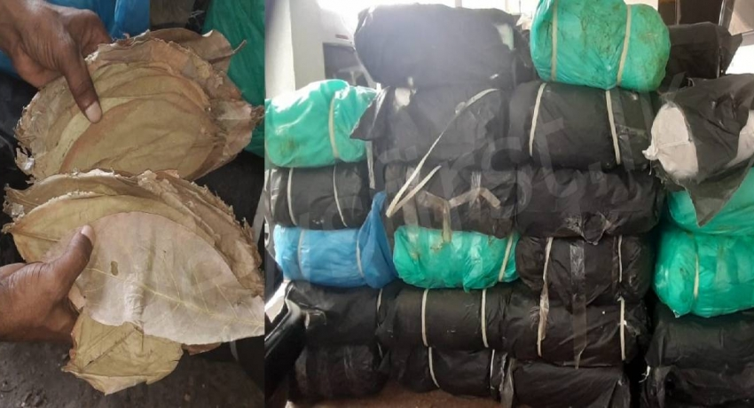 06 arrested with 1500 Kg of Beedi Leaves worth Rs. 12Mn: Police