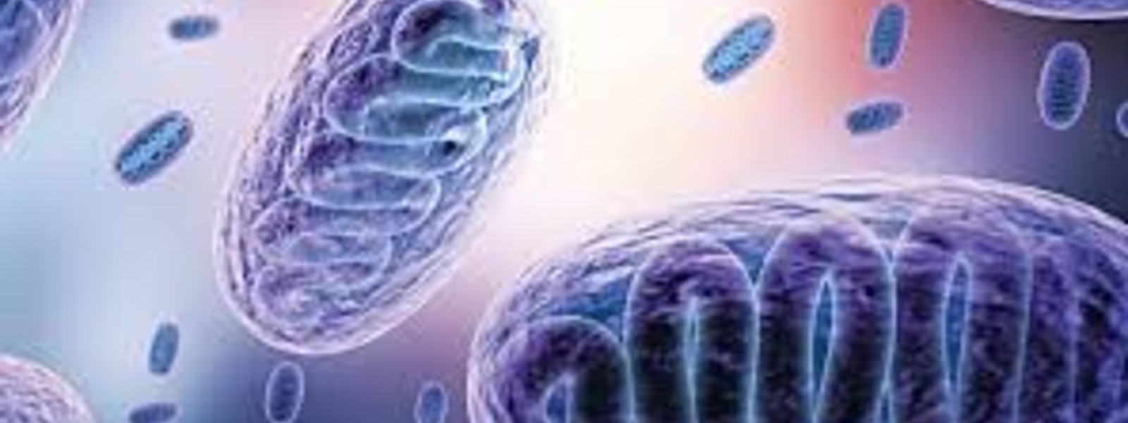 """Black Fungus can be treated and no need to panic,"" – Dr. Primali Jayasekara"