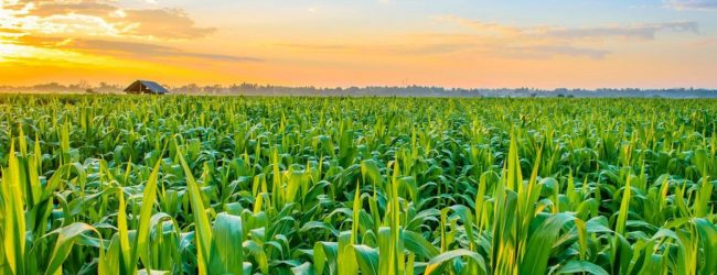 Fertilizer shortage could threaten agriculture sector as a whole – Experts