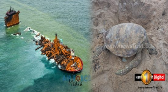 Dead sea turtles continue to wash up on SL shores; Authorities plan to seek maximum compensation