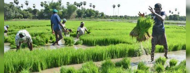 Fertilizer shortage continues to affect farmers