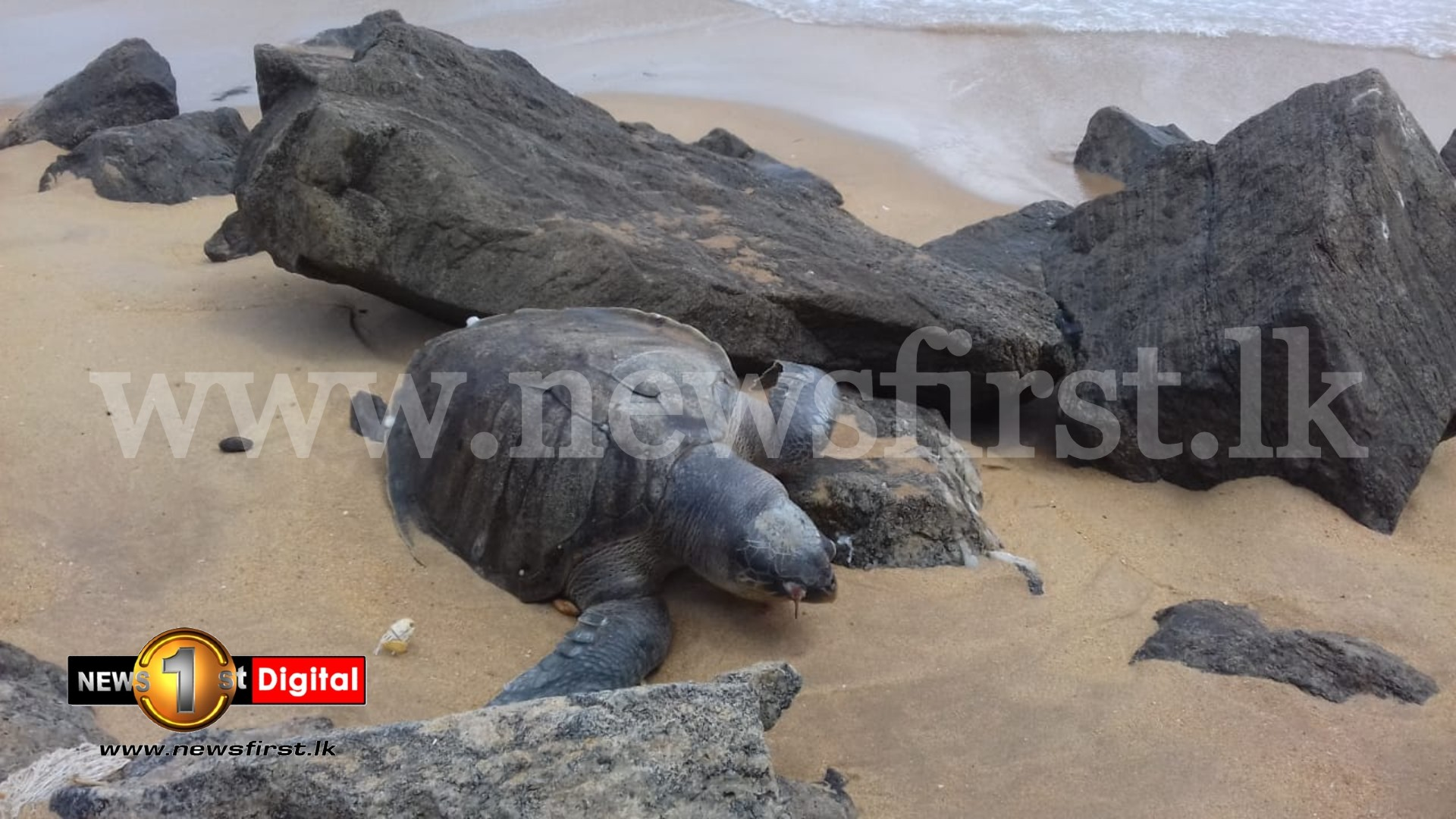 Chemical Leak responsible for Sea Turtle deaths: Minister