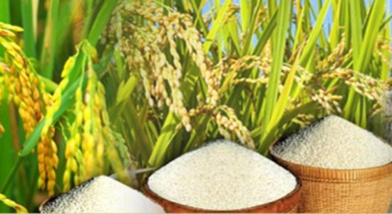 Rs. 100,000/- fine on traders selling rice at high prices – Agriculture Minister