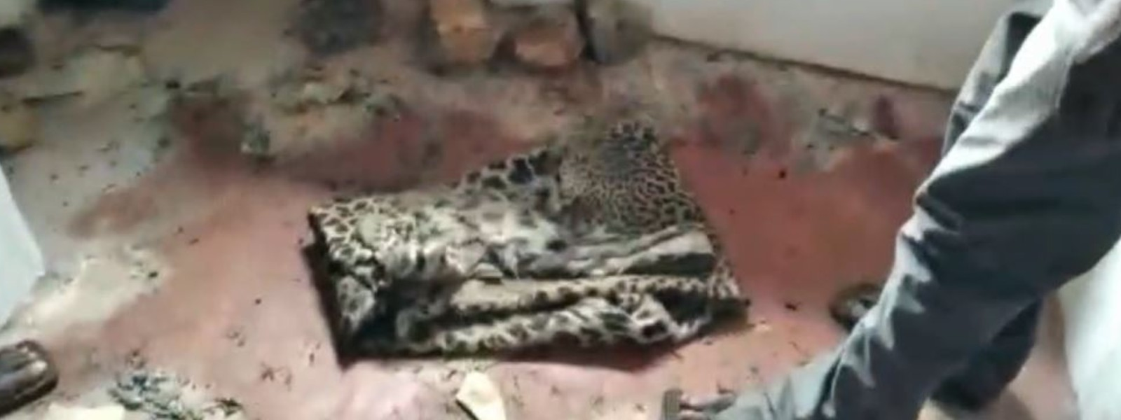 03 arrested for killing leopard and selling its meat, released on bail
