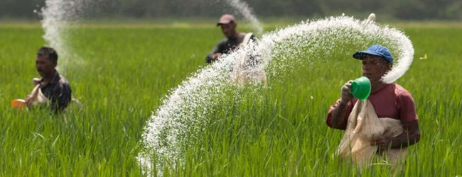 'Release Fertilizer stocks within a week', Agriculture Minister tells Fertilizer companies
