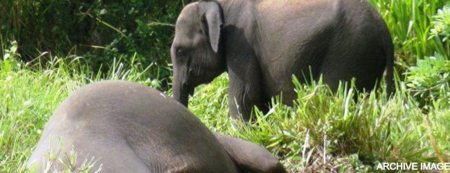 AG assures progress report on Thumbikulama Elephant deaths, in two weeks