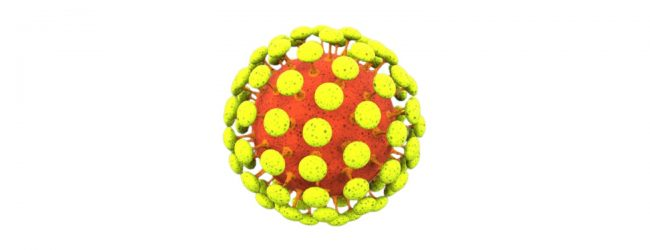 61 people infected with Delta COVID variant detected so far in Sri Lanka