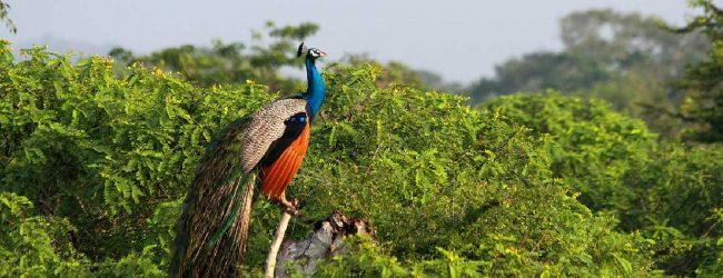 Yala National Park to lose land?