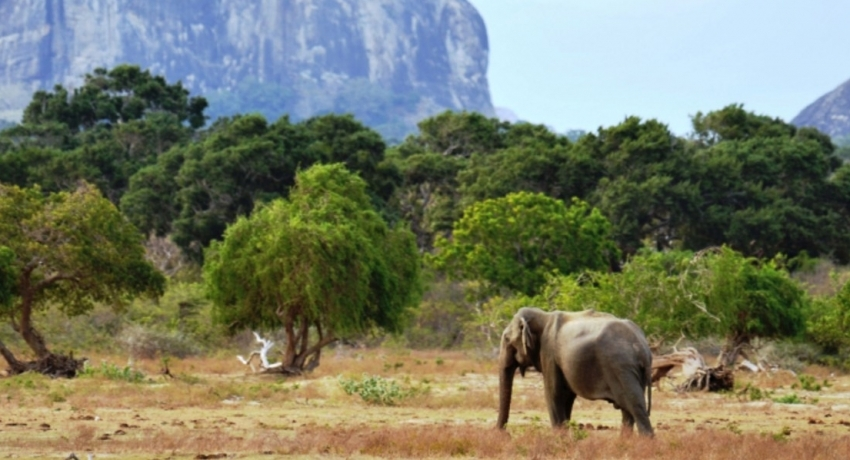 Yala opened to ONLY foreign tourists amidst allegations of forest destruction