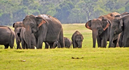 Strict regulations issued for elephant caretakers