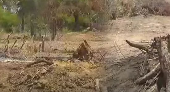 01 km stretch of Yala Buffer Zone allegedly cleared