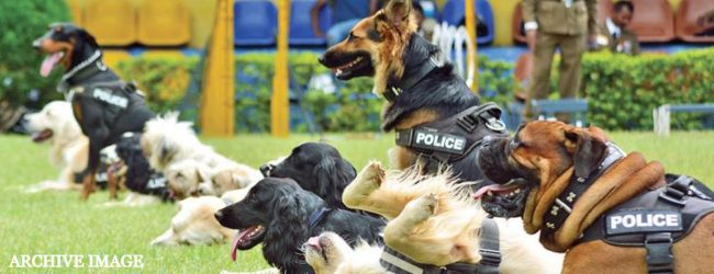 Police K9 Units trained to detect dengue breeding grounds