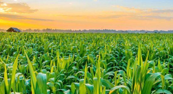 Mafias undermine Sri Lanka's Agriculture sector – Agriculture Minister